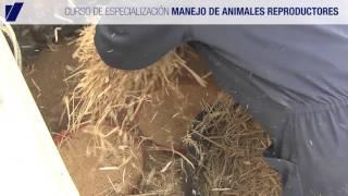 Curso de  MANEJO DE ANIMALES REPRODUCTORES