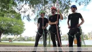 Evergreen Tree Care Brisbane | Tree Removal Brisbane | Arborists Tree Removal
