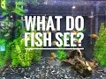 What do fish see?