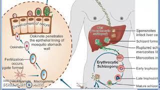 protozoan férgek egy gyermekben