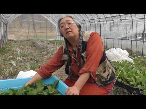 "Farmreport from ""Sophia Farm"" in Japan"