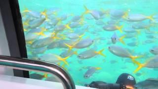 Fish Group Thumbnail