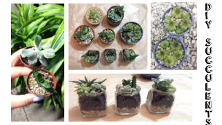 Diy: Potting Succulents