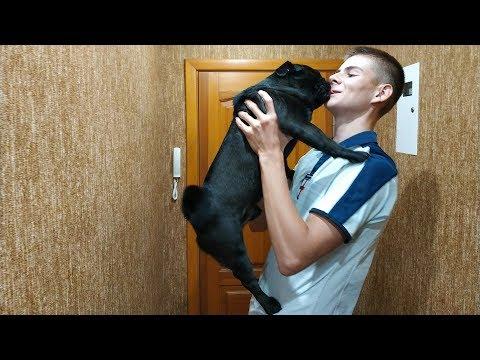 МОПС ВСТРЕЧАЕТ ХОЗЯИНА ПОСЛЕ ДОЛГОЙ РАЗЛУКИ / DOGS MEETS OWNER AFTER LONG TIME!