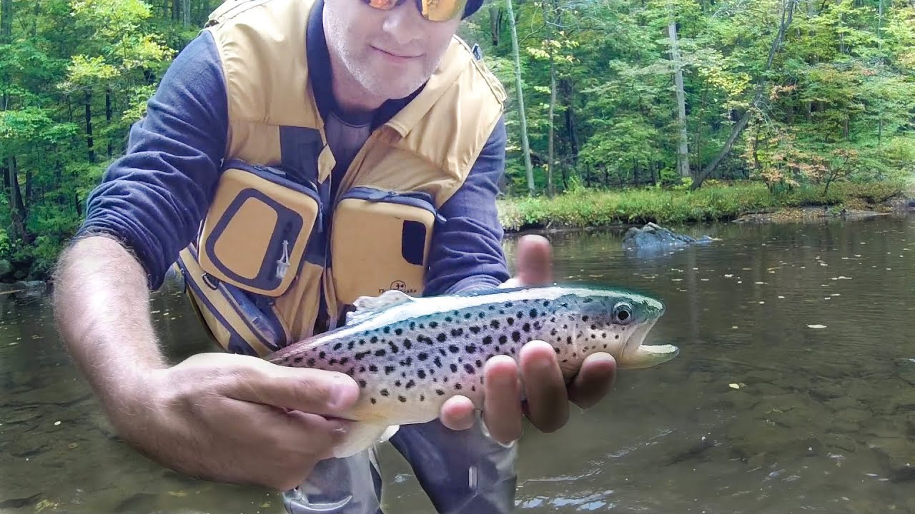 New jersey fishing for trout close to delaware river for Trout fishing nj