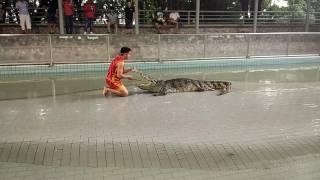 Шоу крокодилов (Тайланд, Паттайя, октябрь 2016)