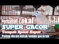 Perkutut Lokal Manggung Super Gacor Tempo Speed Rapat Cocok Untuk Lomba Gacoran  Mp3 - Mp4 Download