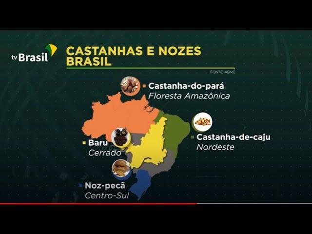 Brasil exporta 200 milhões de dólares em nozes e castanhas por ano
