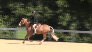 Video of MARANATHA PIZZAZZ ridden by CHAPIN CHESKA from ShowNet!