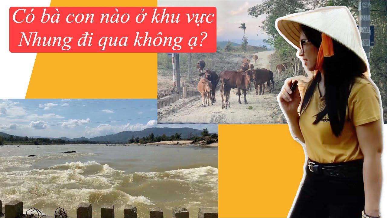#51. NNMT: Đường về Sơn Hà, có cây có núi, có suối có sông, có bò đi rông