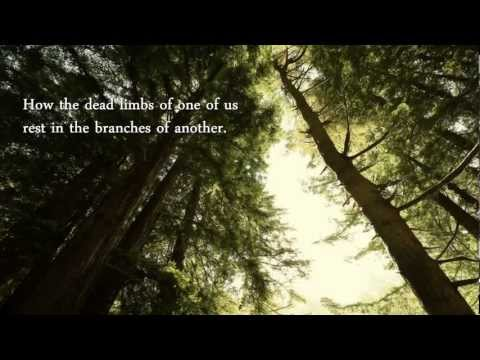 Forest - Susan Griffin, music by David Lanz
