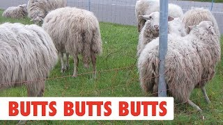 Butts Butts Butts