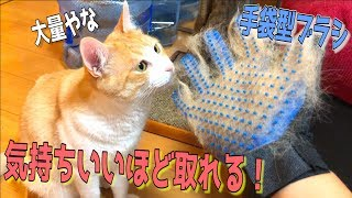 恐ろしいほど毛が取れる手袋ブラシが気持ちよすぎて猫がメロメロになったwww