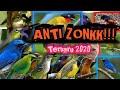 Suara Pikat Burung Bandel Yang Susah Mendekat Turun Anti Zonk Terbaru   Mp3 - Mp4 Download