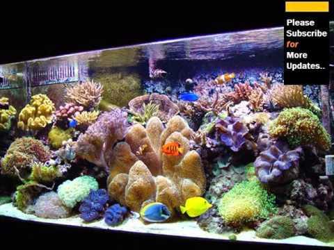 Inside pics of saltwater aquarium fish tank youtube for Saltwater fish aquarium