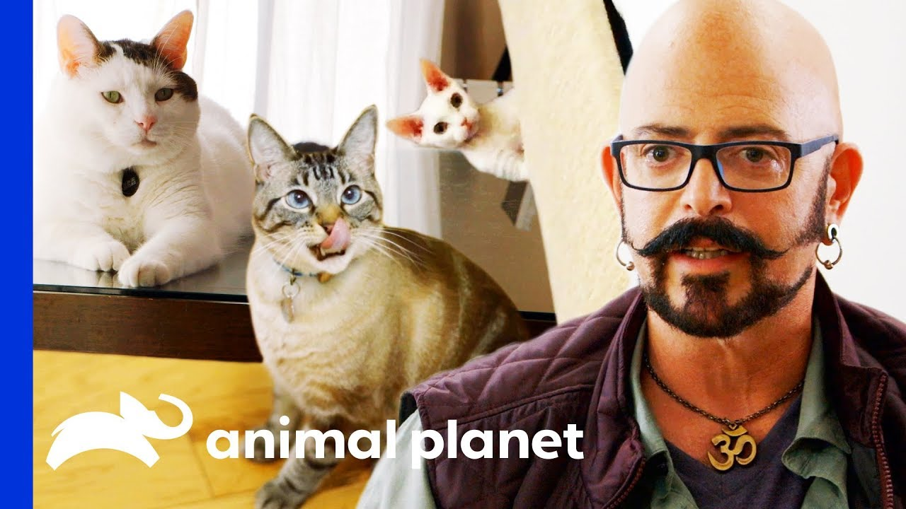 Jackson Galaxy's Top Tips For Cat Owners | My Cat From Hell