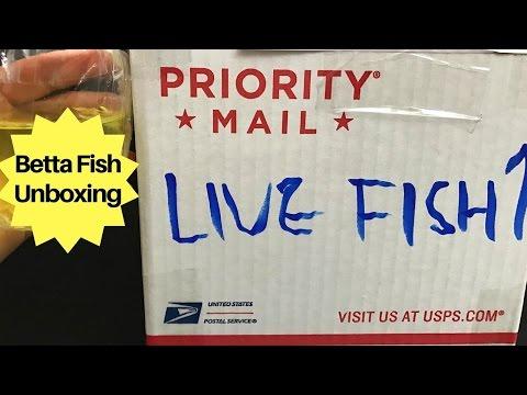 UNBOXING MY $200 BETTA FISH
