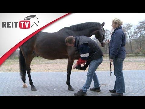pferdegesundheit sehnenschaden so wird er behandelt und wie man vorbeugen kann youtube. Black Bedroom Furniture Sets. Home Design Ideas