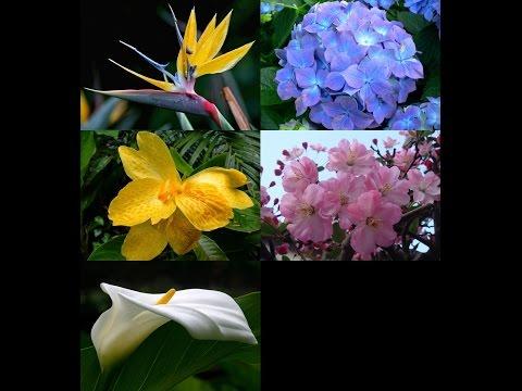 5 อันดับ ดอกไม้ที่สวยที่สุดในโลก