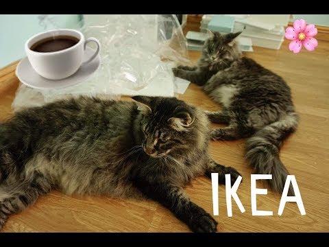 👌 Pogadanka przy kawie 👌 PLOTKI, IKEA, PRACA