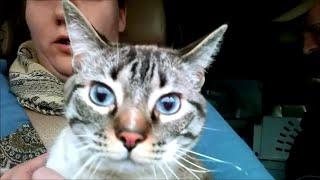 Страшные прививки для наших котов. Приключения Мокки. LifeinUSA. жизнь в США.