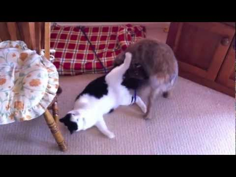 Cute cat beats up dog!