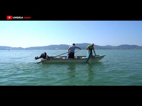 La Pesca Al Lago Trasimeno // Una Tradizione Antica  [UMBRIA NEWS]