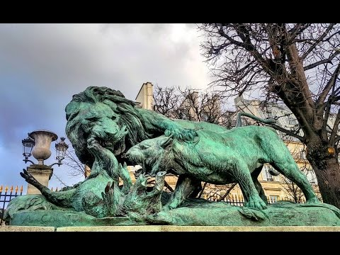 Paris, France : Lion & Lioness fight over a Boar in Tuileries Garden