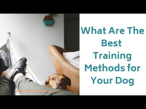 how-can-i-train-my-dog-effectively-|-best-dog-training-methods