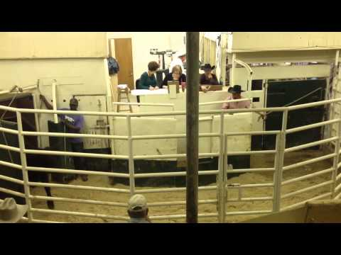 Texas Cattle Auction