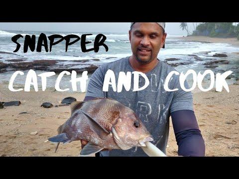 SURF FISHING | CATCH & COOK | SNAPPER [ Sri Lanka Fishing ]