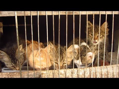 Five kittens with Mother cat live in a warm basement