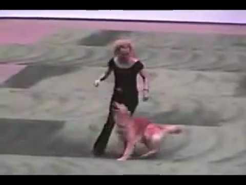 le chien qui sait danser