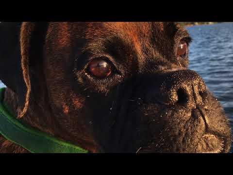 Cooperton....the Ornery Dog