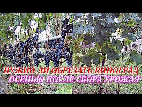 работы на винограднике осенью