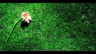 Sejati _ Bila Bunga Dipetik Orang (HQ Audio)