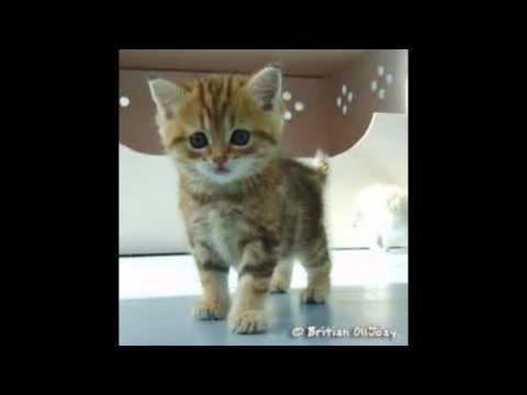 Top 10 des chats les plus mignon darknight600 youtube - Image de chat mignon ...