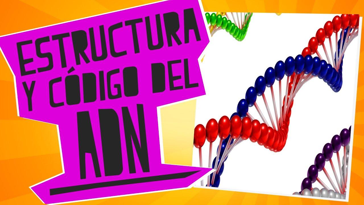 Estructura Y Código Del Adn Biología Educatina