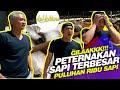 Dehakims Kaget Datang Ke Peternakan Sapi Wmp Pemilik Lovebird Kusumo H Sigit Wmp  Mp3 - Mp4 Download