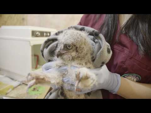 Wildlife Haven Rehabilitation Centre - Building a Permanent Hospital and Education Centre