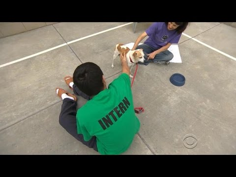Youth detention center connects teens with dogs