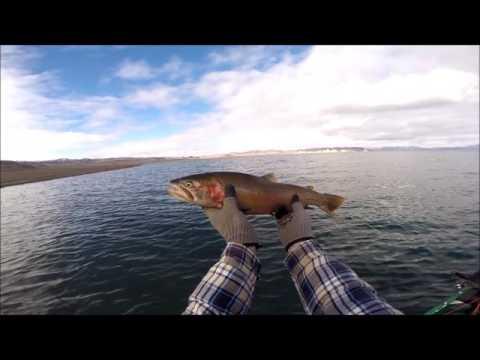 Pyramid Lake Flyfishing