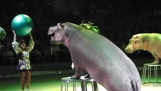 """Шоу Гии Эрадзе """"Гиппопотамус"""" Воронеж 17.09.17/Giya Eradze's show """"Hippopotamus"""" Voronezh 17.09.17"""