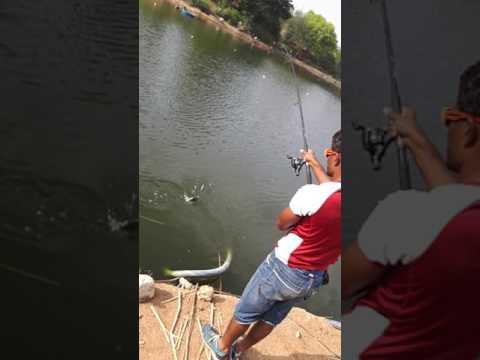 Shafi fishing(3)