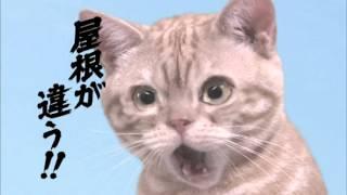 出演者:--- 篇 名:--- 商品名:防災瓦 企業名:鶴弥 TURUYA 放送年:----