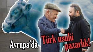 Durmuş'un Rotası - Avrupa'da Türk usulü pazarlık / Belçika Mavisi Nedir? (Ciney - 2018)