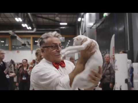 World Cat Show 2018