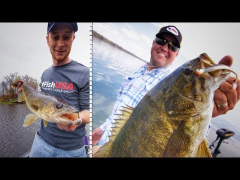 Target Walleye AND Bass With Paddle Tail Swimbaits