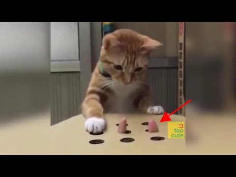 why are cats and dogs so funny ?