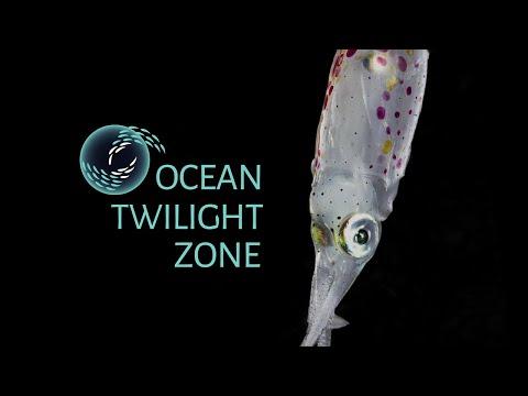 Creatures Of The Ocean Twilight Zone